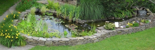 Just one of the many display ponds and gardensmy husband has lovingly created here on our property.